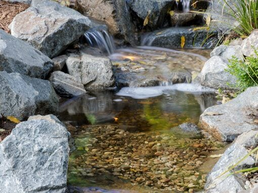 Pasadena Showcase 2017 | 20′ Pondless
