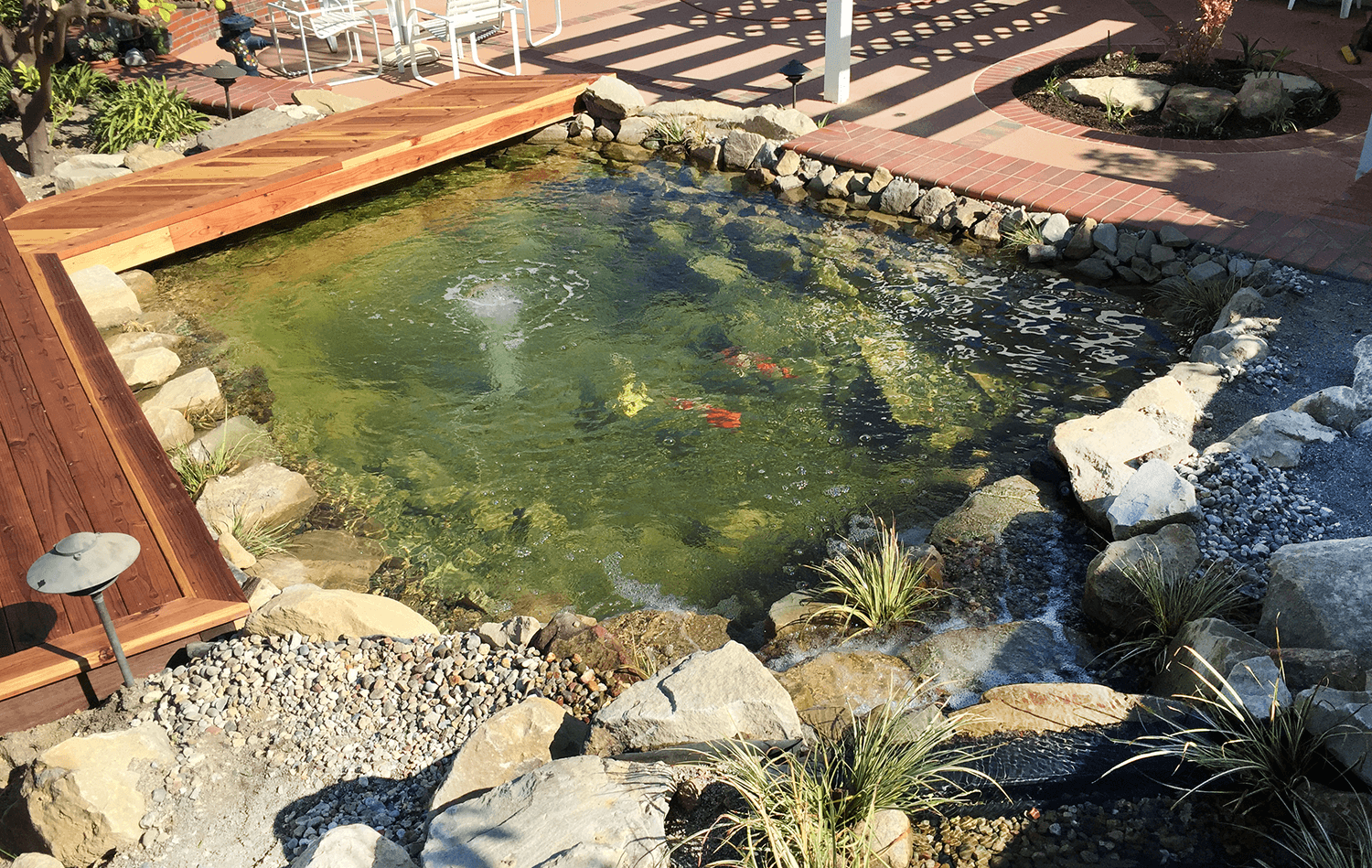 gorgeous koi pond with a view - small yard remodel