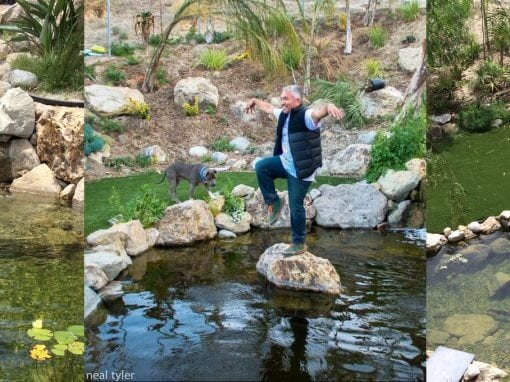 Cesar Millan | 15′ x 22′ Dog Pond