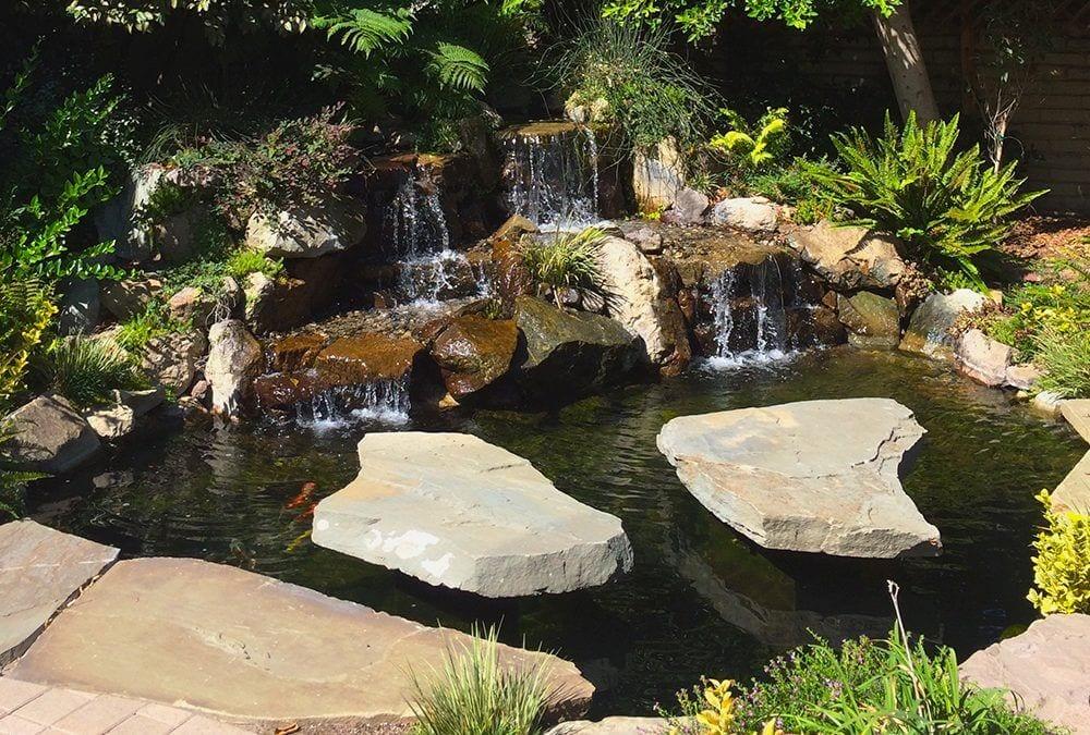 Karmin's Koi   8′ x 12′ Pond