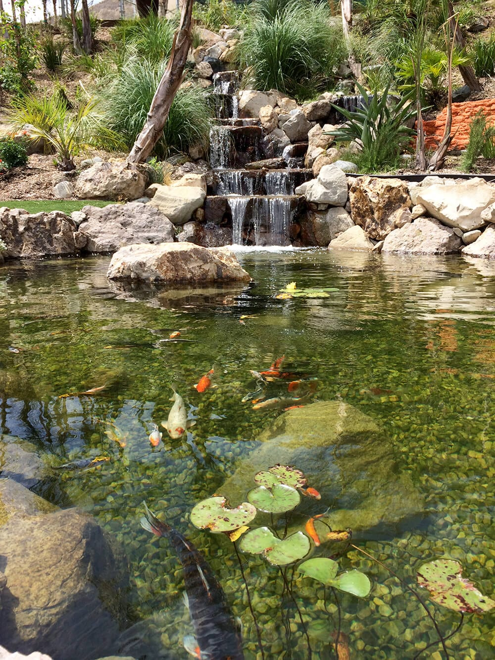 Waterfall after photo with koi fish