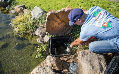 Pond Care Tips Before and After Storms